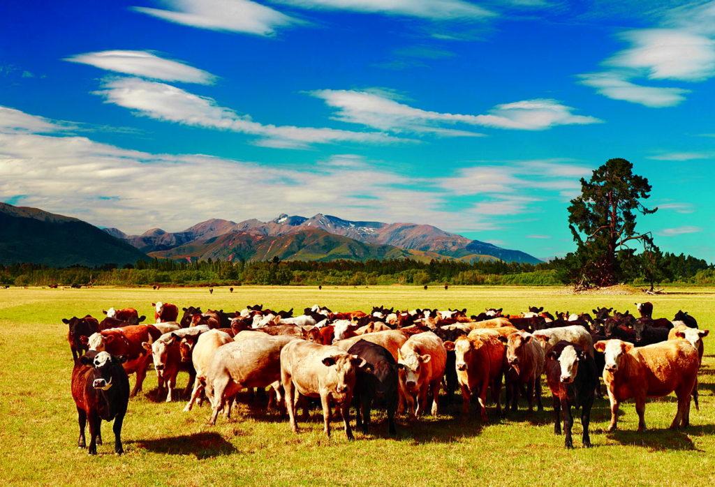 GPS-маяки на защите домашнего скота