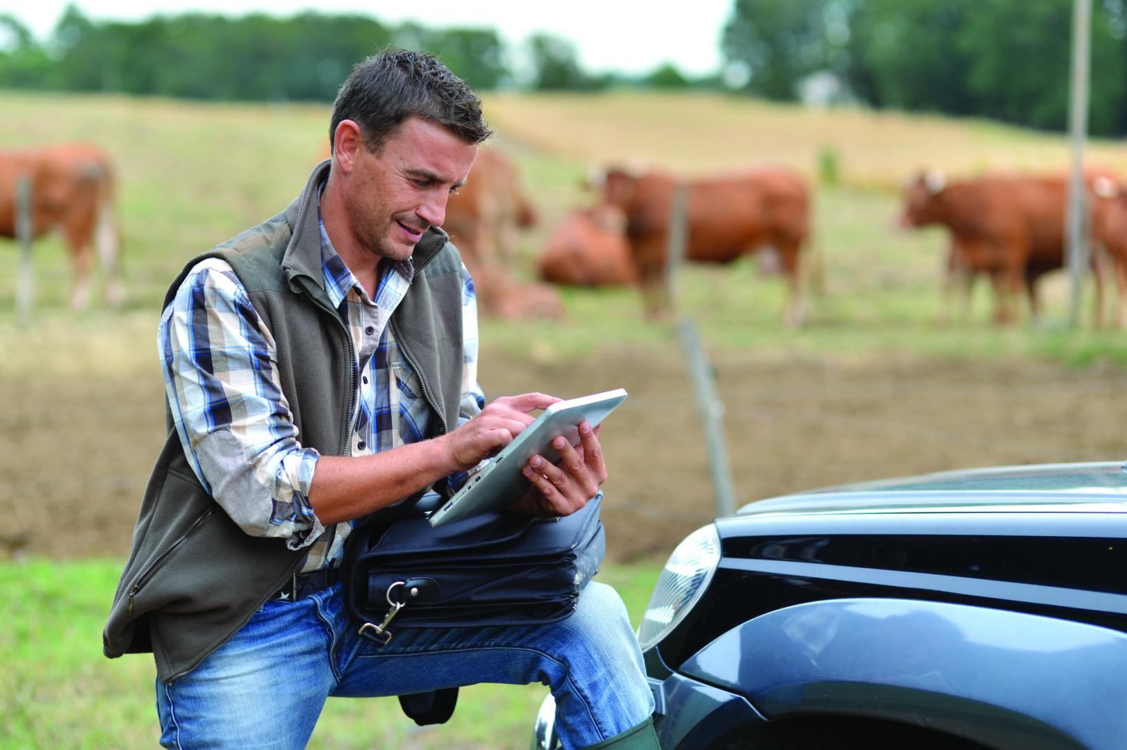 Отслеживание коров, лошадей с помощью gps-маяка