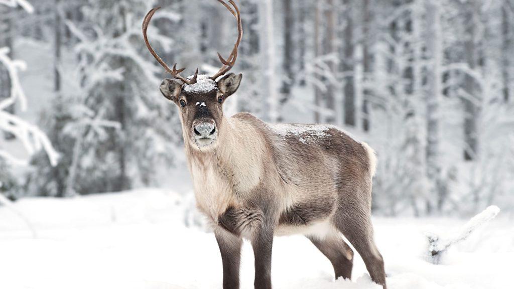 ГЛОНАСС проследит за северными оленями
