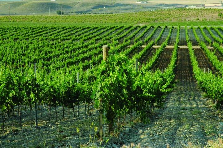 Мониторинг виноградников