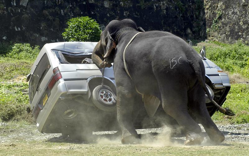 Непал: «проблемным» слонам наденут GPS-ошейники