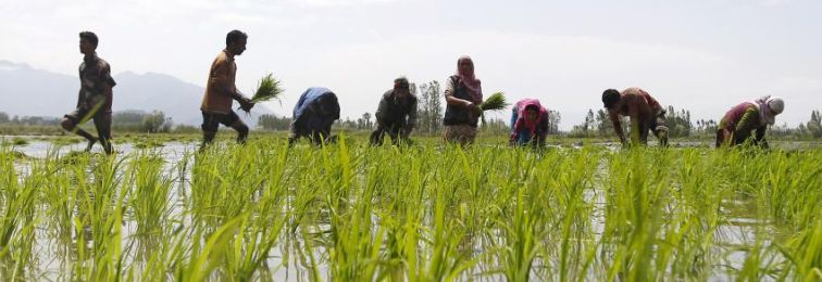 сельское хозяйство в индии