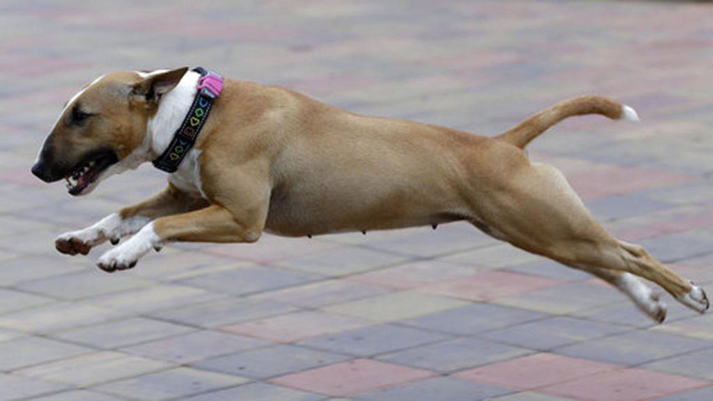 Если питомец обленился: фитнес-трекер для животных!