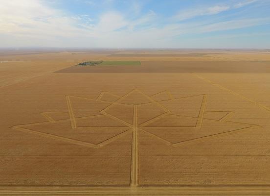 GPS как искусство: системы точного земледелия для профессионалов