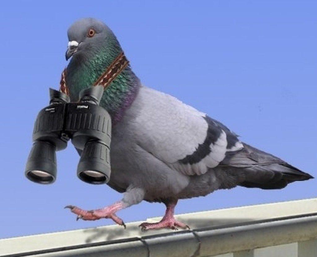птица-шпион