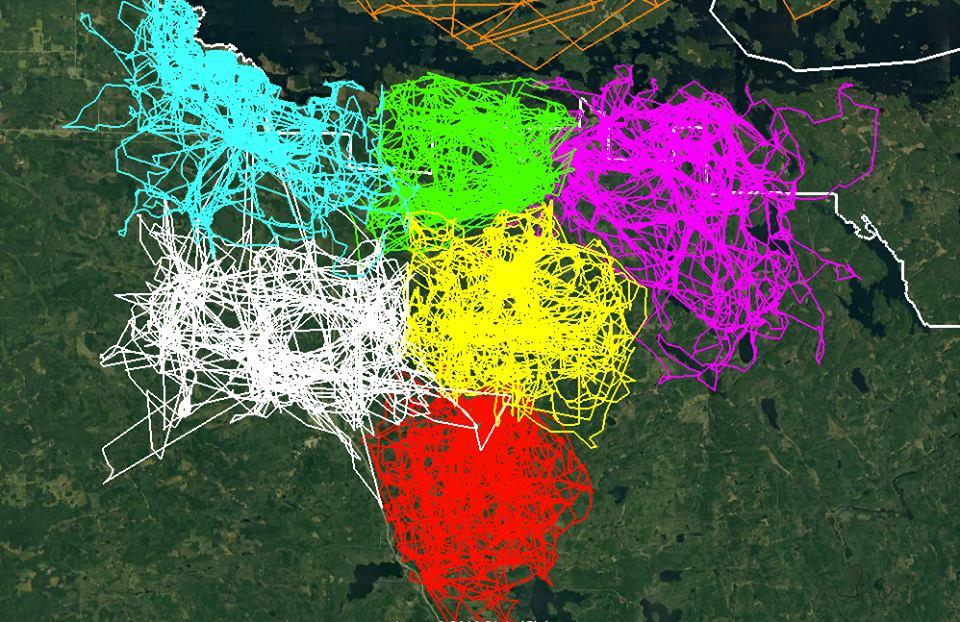 США: GPS используют для определения «сфер влияния» волчьих стай